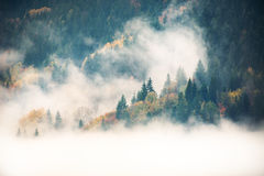 Beautiful autumn landscape in the mountains royalty free stock image