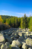 Beautiful autumn. Landscape with pine trees and rocks Stock Images