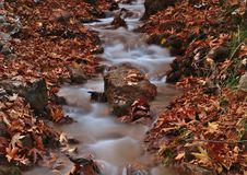 Beautiful autumn landscape from Planitero, in Kalavryta, Greece. Vivid, vibrant colorful fall image. Creek in sycamore plane tree. Beautiful autumn landscape stock photos