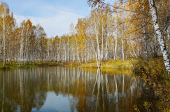 Beautiful autumn landscape at the pond Stock Photography