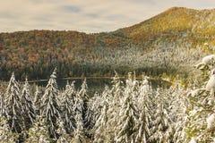 Beautiful autumn landscape and snowy trees,St Anna. Snowy trees and colorful autumn landscape,St Anna lake,Transylvania,Romania Royalty Free Stock Photography