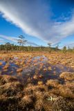 A beautiful autumn landscape with a swamp in Femundsmarka National Park in Norway. Colorful autumn scenery. Wet forest in Norway Stock Photos