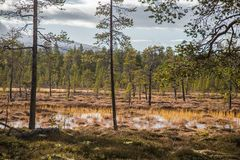 A beautiful autumn landscape with a swamp in Femundsmarka National Park in Norway. Colorful autumn scenery. Wet forest in Norway Royalty Free Stock Photos