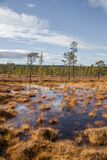 A beautiful autumn landscape with a swamp in Femundsmarka National Park in Norway. Colorful autumn scenery. Wet forest in Norway Stock Photography