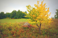 Beautiful autumn landscape Stock Photography