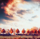 Beautiful autumn landscape with trees, field and sky. Fall outdoor nature. Background Stock Photography