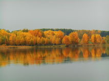 Beautiful autumn landscape of trees reflected in water Royalty Free Stock Images