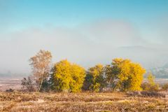 Beautiful autumn landscape in the valley. Fog above the meadow and yellow trees in sunlight. mountain is seen in the far distance Stock Image