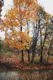Orange autumn trees. Beautiful autumn landscape with a view of bright orange trees near the pond stock photos