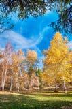 Beautiful autumn landscape Royalty Free Stock Photography