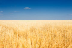 Beautiful autumn landscape with yellow field and sky. Stock Photos