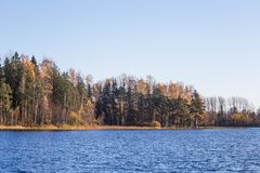 Beautiful autumn landscape with yellow leaves in wetlands. Swamp scenery in fall. Royalty Free Stock Image