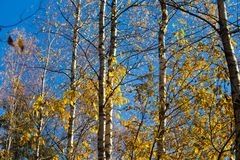 Beautiful autumn landscape with yellow leaves in wetlands. Swamp scenery in fall. Stock Photography