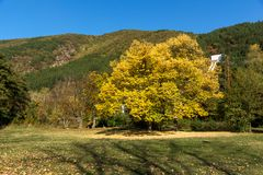 Autumn Landscape with yellow tree near Pancharevo lake, Sofia city Region, Bulgaria. Beautiful Autumn Landscape with yellow tree near Pancharevo lake, Sofia city royalty free stock photo