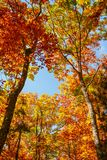 Beautiful autumn landscape with yellow trees stock images