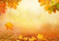 Beautiful autumn landscape with yellow trees,green and sun. Colo stock photo