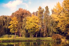 Beautiful autumn landscape with yellow trees near the lake.  royalty free stock photos