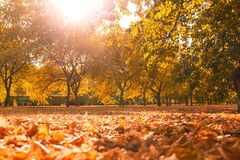 Beautiful autumn landscape with yellow trees and sun stock image