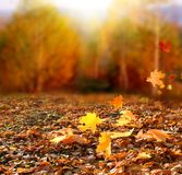 Beautiful autumn landscape with yellow trees and sun. Colorful f stock image