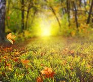 Beautiful autumn landscape with yellow trees and sun. Colorful f stock photo