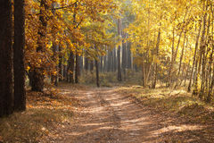 Beautiful autumn lane in the forest. Autumn landscape. Composition of nature. Stock Images