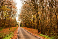 Beautiful autumn lane in the forest. Beautiful autumn lane forest fall Stock Photos