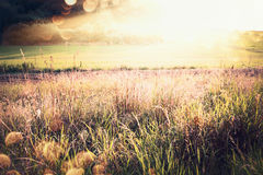 Beautiful autumn or late summer country landscape with grass, field and sunbeams Stock Photography
