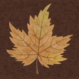 Beautiful autumn leaf Royalty Free Stock Photo