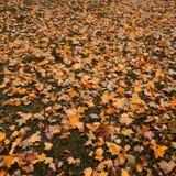Beautiful autumn leaf fall Stock Photos