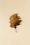 Beautiful autumn leaf on pastel background stock photography