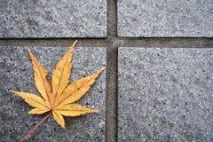 Beautiful autumn leaf Royalty Free Stock Image