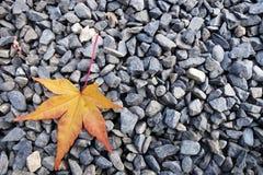 Beautiful autumn leaf Stock Photo