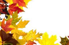 Beautiful autumn leafs Stock Photo