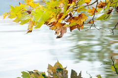 Beautiful autumn leaves above water Royalty Free Stock Images