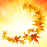 Beautiful autumn leaves background Stock Images
