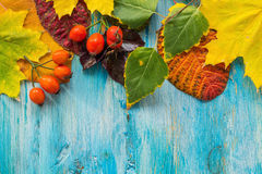 Beautiful autumn leaves. Royalty Free Stock Photo