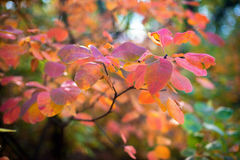 Beautiful autumn leaves on a blurred background of sunlight. Stock Photos