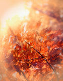 Beautiful autumn leaves Stock Photos