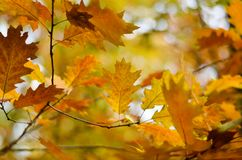 Beautiful autumn leaves royalty free stock photography