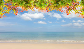 beautiful autumn leaves frame on beach and sky scenery backgroun Stock Image