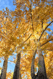 Beautiful autumn leaves Stock Image