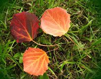 Colorful autumn leaves on grass, Lithuania Royalty Free Stock Photo
