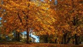 Beautiful autumn leaves in the nice day. One nice day at the park with beautiful autumn color Stock Photos
