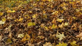 Beautiful Autumn leaves in the park, Coatbridge, Scotland stock video footage