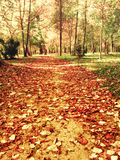 Beautiful autumn leaves in park path stock photos
