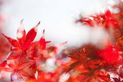 Beautiful autumn leaves and sky background in fall season Royalty Free Stock Photos