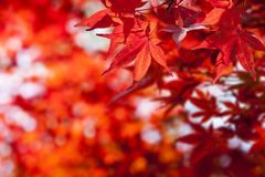 Beautiful autumn leaves and sky background in fall season Stock Photography
