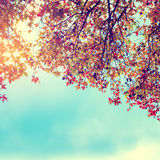 Beautiful autumn leaves and sky background in fall season, Royalty Free Stock Photos