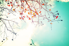Beautiful autumn leaves and sky background in fall season Stock Image