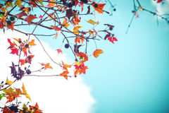 Beautiful autumn leaves and sky background in fall season, Stock Images